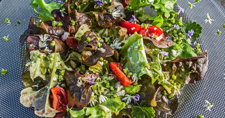 Gemischter Salat mit Bärlauchfrüchten und Gundermann