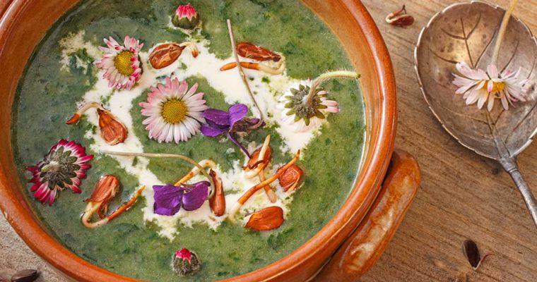 Spinatsuppe mit Buchensprossen